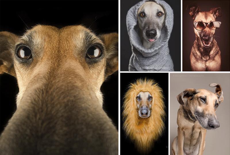 Fotografías con Caras de Perros Super Graciosos