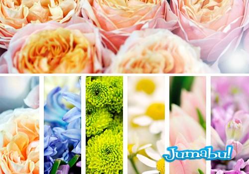 Imágenes de Flores en Alta Resolución