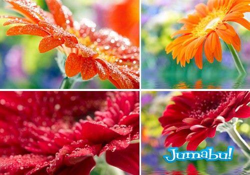 Imágenes de Flores o Margaritas en Alta Definición