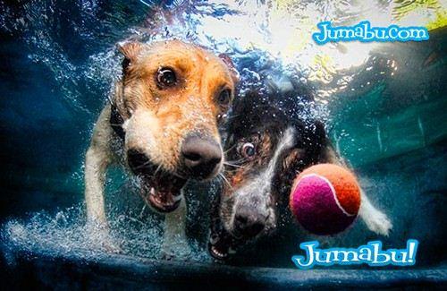 Imagenes de Perros Bajo el Agua para Inspirarnos